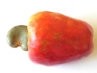 anacardium occidentale cashew apple